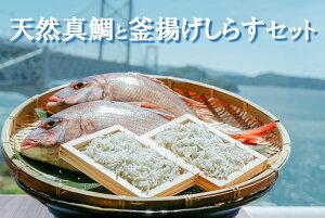 【ふるさと納税】海の産直便 天然真鯛(2尾)と釜揚げしらす(2パック)の詰合せセット【2名用】