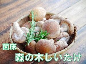 【ふるさと納税】【森の木ファーム】淡路島産の菌床生椎茸(しいたけ)