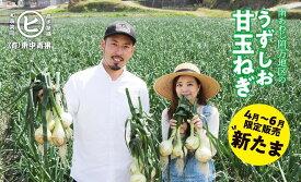 【ふるさと納税】淡路島産新玉ねぎ うずしお甘玉ねぎ L 3kg