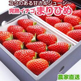 【ふるさと納税】完熟いちご(まりひめ)2パック いちご農家直送 和歌山県産