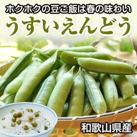 【ふるさと納税】春の味わい うすいえんどう 2kg 和歌山県産