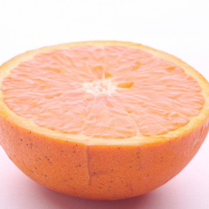 【ふるさと納税】和歌山のセミノールオレンジ10kg ※2019年4月発送予定