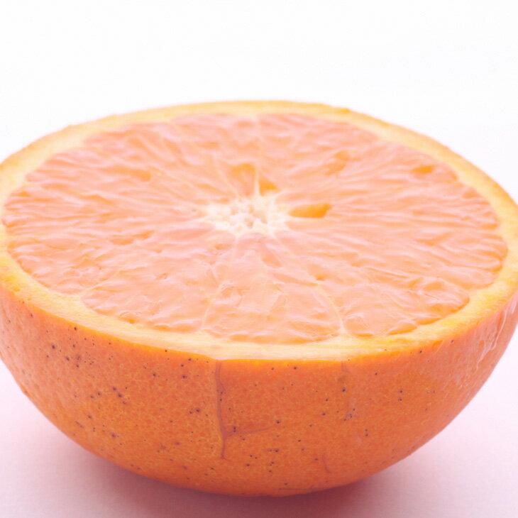 【ふるさと納税】和歌山のセミノールオレンジ7.5kg ※2019年4月発送予定