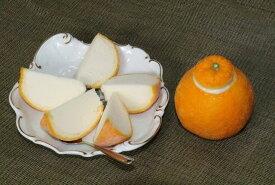 【ふるさと納税】■まるごと三宝柑シャーベット