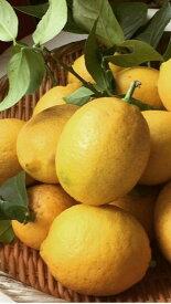 【ふるさと納税】■国産有田レモン約5kgご家庭用
