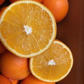 【ふるさと納税】農家直送!こだわりの国産ネーブルオレンジ優 ご家庭用8kg※2020年12月中旬〜2021年1月中旬頃に順次発送予定