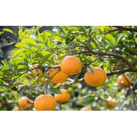 【ふるさと納税】上神農園の甘夏3種類詰め合わせ 10kg 【果物類・柑橘類・フルーツ・果物類・フルーツ・詰合せ】 お届け:2021年4月上旬〜2021年4月下旬