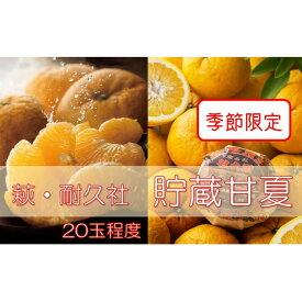 【ふるさと納税】萩耐久社 貯蔵 甘夏 約10kg 【果物類・柑橘類・フルーツ】 お届け:2021年5月1日〜5月31日