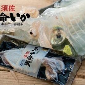 【ふるさと納税】自宅で透明感を再現!須佐男命いかの姿造り(刺身)特殊冷却「3D冷凍」パック 1個 【魚貝類・イカ・刺身】 お届け:2021年6月〜2022年1月 ※出荷は6月からとなります。