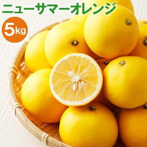 【ふるさと納税】 ニューサマーオレンジ 5kg 柑橘 果物 くだもの フルーツ 福岡県産 送料無料 【2020年4〜5月頃から順次発送】