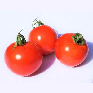 【ふるさと納税】福津のミニトマト 3種 セット 200g×2パック×3セット 合計1.2kg フルティカ アイコ 千果 食べ比べ あんずの里 トマト ミニトマト プチトマト 中玉トマト とまと 野菜 九州産 国
