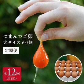 【ふるさと納税】プリップリの卵が毎月届く!全12回 つまんでご卵60個セット定期便 たまご/卵/鶏卵/玉子/平飼い卵/卵かけご飯/たまごかけご飯 AGA016