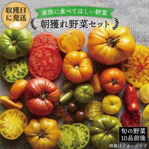 【ふるさと納税】朝獲れ!無農薬糸島野菜セット(11品前後) (オーガニックナガミツファーム)AGE003