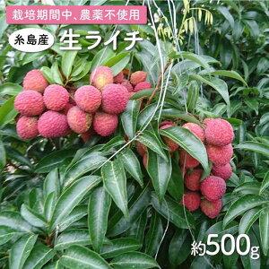 【ふるさと納税】糸島産 生ライチ(約500g) 栽培期間中 農薬不使用 吉永紫 AHC020