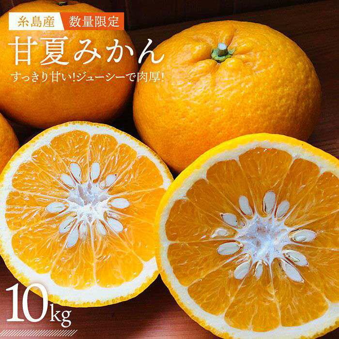【ふるさと納税】糸島産甘夏ミカンAIC001