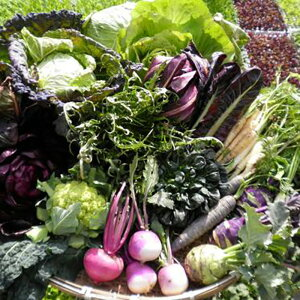 【ふるさと納税】【12品×24回定期便】あいちゃん農園の「イタリア野菜」セット(ラージ) [FAA023]