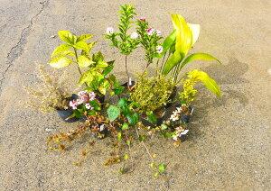【ふるさと納税】和洋折衷Aガーデニングセット10種 花 苗 植物 アレンジ 春 夏 花壇 プランター イングリッシュ 厳選 数量限定(BS027)