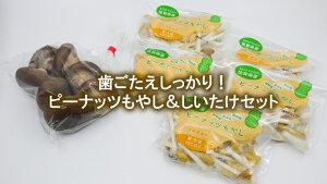 【ふるさと納税】東京もやしで有名な川崎食品のピーナッツもやし(70g×5袋)&しいたけ150g(DQ002)