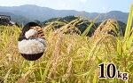 【ふるさと納税】K10-2有田発の棚田米・心感鮮(シンカンセン)10kg
