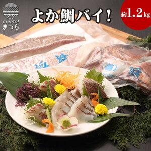 【ふるさと納税】真鯛1匹柵どり済みで刺身・焼物・煮物に扱いやすさ抜群!よか鯛バイ!【B5-006】