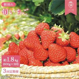 【ふるさと納税】朝採れいちご 計1.8kg(600g×3回定期便)<バイオファーム> [CCB003]