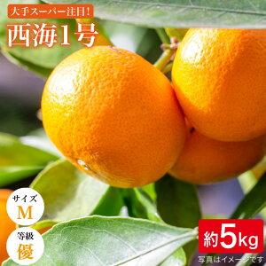 【ふるさと納税】【優品5kg/Mサイズ】西海1号(山本早生/温州みかん)<西海柑橘農業協同組合> [CCF003]