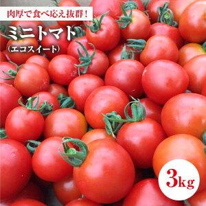 【ふるさと納税】【食卓をもっと楽しく!】ミニトマト エコスイート 3.0kg【tomattea】 [BAR003]