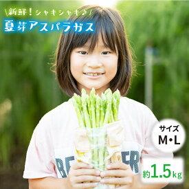 【ふるさと納税】【とれたて新鮮♪】夏芽アスパラガス1.5kg(MLサイズ混合) BBW001