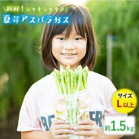 【ふるさと納税】【とれたて新鮮♪】夏芽アスパラガス1.5kg(Lサイズ以上) BBW002