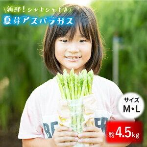 【ふるさと納税】【とれたて新鮮♪】夏芽アスパラガス4.5kg(MLサイズ) 【はゆっちFarm】BBW005