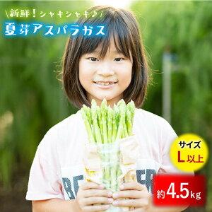 【ふるさと納税】【とれたて新鮮♪】夏芽アスパラガス4.5kg(Lサイズ以上)【はゆっちFarm】 BBW006