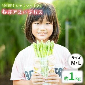 【ふるさと納税】【先行予約】採れたて新鮮春芽アスパラガス 1kg/MLサイズ [BBW008]