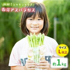 【ふるさと納税】【先行予約】採れたて新鮮春芽アスパラガス 1kg/Lサイズ以上 [BBW009]