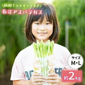 【ふるさと納税】【先行予約】採れたて新鮮春芽アスパラガス 2kg/MLサイズ [BBW010]