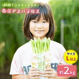 【ふるさと納税】【先行予約】採れたて新鮮春芽アスパラガス 2kg/Lサイズ以上 [BBW011]