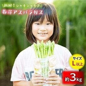 【ふるさと納税】【先行予約】採れたて新鮮春芽アスパラガス 3kg/Lサイズ以上 [BBW013]