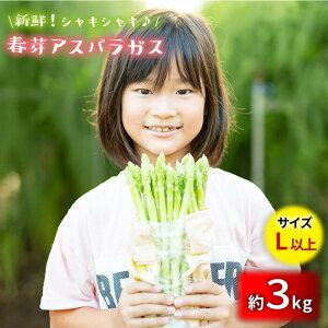 【ふるさと納税】採れたて新鮮春芽アスパラガス 3kg/Lサイズ以上 [BBW013]