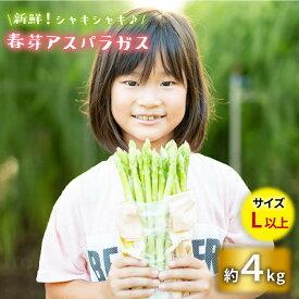 【ふるさと納税】【先行予約】採れたて新鮮春芽アスパラガス 4kg/Lサイズ以上 [BBW015]