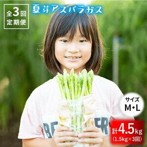 【ふるさと納税】【3回定期便】夏芽アスパラガス1.5kg(MLサイズ混合)【はゆっちFarm】 [BBW016]