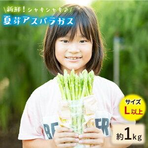 【ふるさと納税】【とれたて新鮮♪】夏芽アスパラガス1kg(Lサイズ以上)【はゆっちFarm】 [BBW018]
