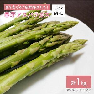 【ふるさと納税】【先行予約!採れたてをお届け】春芽アスパラガス 1kg(ML混合)【Natural Farm クチハラ】 [BCE005]