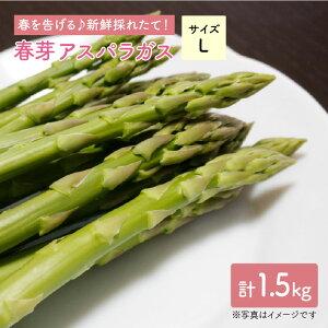 【ふるさと納税】【先行予約!採れたてをお届け】春芽アスパラガス 1.5kg(Lサイズ)【Natural Farm クチハラ】 [BCE008]