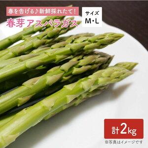 【ふるさと納税】【先行予約!採れたてをお届け】春芽アスパラガス 2kg(ML混合)【Natural Farm クチハラ】 [BCE009]