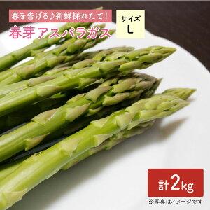 【ふるさと納税】【先行予約!採れたてをお届け】春芽アスパラガス 2kg(Lサイズ)【Natural Farm クチハラ】 [BCE010]