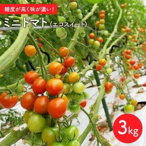 【ふるさと納税】【甘くて濃い】ミニトマト(エコスイート) 3kg【山口製茶】 [BCO001]