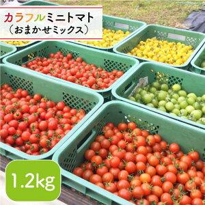 【ふるさと納税】【おまかせMIX】カラフルミニトマト<りんたろうファーム> [DAE002]