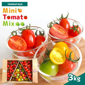 【ふるさと納税】ミニトマト 3kg 熊本県 玉名市 ミックス カラートマト メープルスイーツ 送料無料