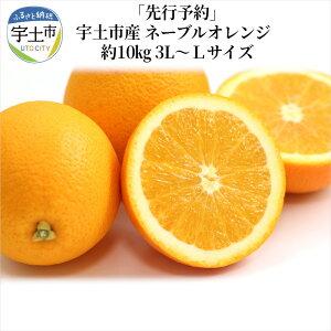 【ふるさと納税】「先行予約」宇土市産 ネーブルオレンジ 約10kg 3L〜Lサイズ【熊本県宇土市】