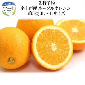 【ふるさと納税】「先行予約」宇土市産 ネーブルオレンジ 約5kg 3L〜Lサイズ【熊本県宇土市】