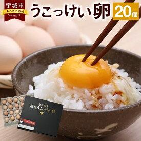 【ふるさと納税】【9月下旬以降順次発送】 熊本県宇城市 うこっけい卵 20個 国産 卵 うこっけい 冷蔵 産地直送 鶏卵 送料無料